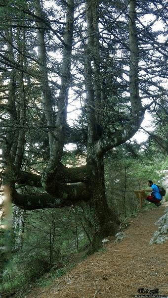 Senderismo Malaga Sierra de las Nieves pinsapar